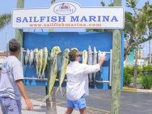 Uma fileira dos peixes que penduram sob o sinal do porto do Sailfish, Florida fotos de stock
