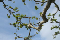 Uma filial de uma árvore Imagem de Stock