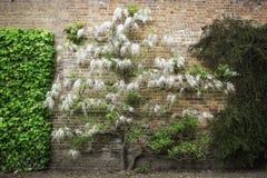 Uma flor/árvore de florescência bonitas da mola Fotos de Stock