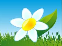 Uma flor é uma comomile ilustração stock