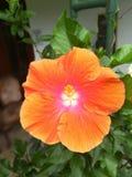 Uma flor Imagens de Stock Royalty Free