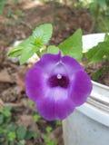 Uma flor Fotos de Stock