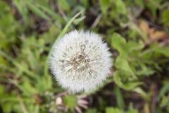 Uma flor Imagens de Stock
