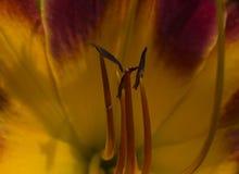 Uma flor agradável Imagem de Stock Royalty Free