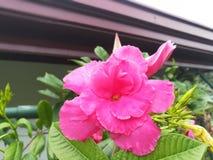 Uma flor alaranjada Imagens de Stock