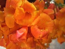 Uma flor alaranjada bonita imagens de stock royalty free