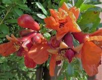 Uma flor alaranjada bonita foto de stock