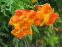 Uma flor alaranjada bonita imagem de stock
