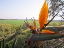 Uma flor alaranjada bonita fotos de stock