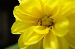 uma flor amarela Foto de Stock