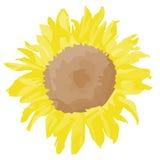 Uma flor amarela imagens de stock royalty free