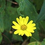 Uma flor amarela aleatória bonita fotos de stock