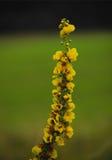 Uma flor amarela alta fotos de stock