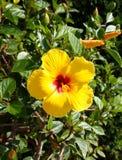 Uma flor amarela com uma aba longa foto de stock