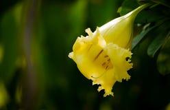 Uma flor amarela em um jardim Fotografia de Stock