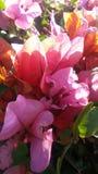 Uma flor bonita fotografia de stock royalty free