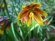 Uma flor bonita imagens de stock