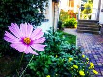 Uma flor bonita imagens de stock royalty free