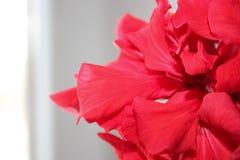Uma flor bonita Fotos de Stock