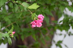 Uma flor bonita fotografia de stock