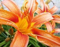 Uma flor bonita ama o mundo inteiro Imagens de Stock Royalty Free