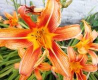 Uma flor bonita ama o mundo inteiro Foto de Stock Royalty Free
