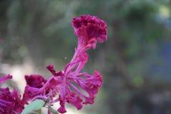 Uma flor bonita do inverno fotografia de stock
