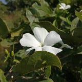 Uma flor branca aleatória bonita fotos de stock royalty free