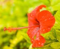 Uma flor com pistil longo fotografia de stock royalty free