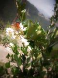Uma flor com um butterbutt fotografia de stock royalty free