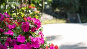 Uma flor cor-de-rosa genérica genérica em um jardim Imagem de Stock Royalty Free