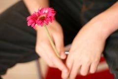 Uma flor cor-de-rosa nas mãos de um homem Fotografia de Stock