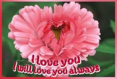 Uma flor coração-dada forma cor-de-rosa brilhante em um fundo preto com as palavras foto de stock
