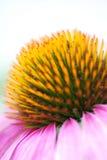 Uma flor da flor Fotografia de Stock