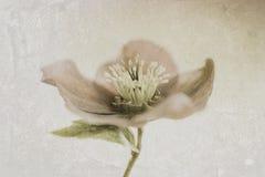 Uma flor da mola Fotos de Stock