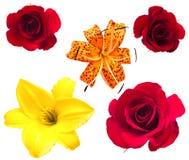 Uma flor das rosas e do lírio. Imagem de Stock