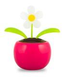 Uma flor de dança posta solar plástica no fundo branco fotografia de stock royalty free