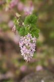 Uma flor de florescência da mola Foto de Stock Royalty Free