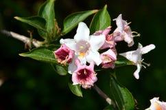 Uma flor de florescência no jardim botânico Foto de Stock Royalty Free