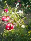 Uma flor de uma garrafa plástica Cogumelo das bandejas velhas Cisne do ônibus A decoração para o jardim fá-lo você mesmo reusar imagem de stock