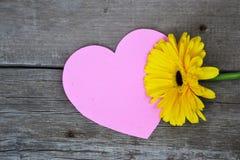 Uma flor do gerbera com coração cor-de-rosa na madeira Foto de Stock Royalty Free