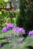 Uma flor do jardim fotografia de stock