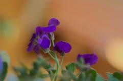 Uma flor do lila fotografia de stock royalty free
