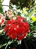 Uma flor e sua luz do sol Foto de Stock
