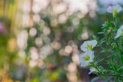 Uma flor e um bokeh Foto de Stock