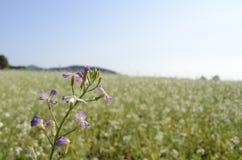 Uma flor em um campo do sol Fotos de Stock