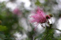 Uma flor pequena Fotos de Stock Royalty Free