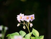 Uma flor pequena Imagem de Stock Royalty Free