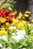 Uma flor pequena na manhã Fotos de Stock Royalty Free