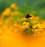 Uma flor que está para fora Foto de Stock Royalty Free